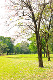 Green city park Royalty Free Stock Images