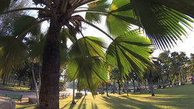 Green city park. Blue sky through palm leaves. Palm trees, people sitting on grass. Action camera stock video