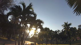 Green city park. Blue sky through palm leaves. Palm trees, people sitting on grass. Action camera. Green city park. Blue sky through palm leaves. Palm trees stock video footage
