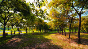 Green city park in sunny summer day Royalty Free Stock Photo