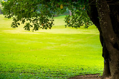 Green city park with trees. Royalty Free Stock Image
