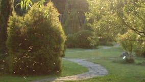 Green City Park, Urban Forest Tree Landscape.  stock video