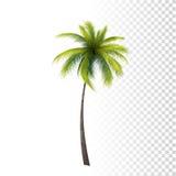 Green Classic Palm Stock Photo