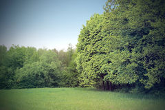 Green clearing in the woods Stock Photos