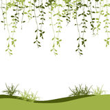 Green climber leaf and grass vector for spring background Stock Photography