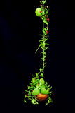 Green climbing plant with little red flower Stock Photo