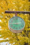 The green clock with ginkgo trees in park, Japan Royalty Free Stock Photography