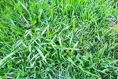 Green. Close up of green meadows Stock Image