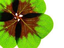 Green clover Stock Photos