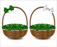 Green clover in a beautiful wicker basket. Stock Images