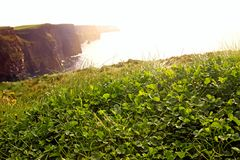 Green clover on the Cliffs of Moher Royalty Free Stock Image