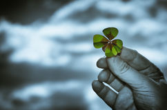 Green clover in hand with sky Stock Image