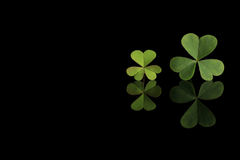 Green clover leaf on black. Backgrounf royalty free stock photos