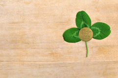 Green clover leaf and coin on wooden board Stock Images