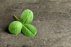 Green clover leaf on gray background with space. For text royalty free stock photography