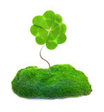 Green clover leaf isolated Royalty Free Stock Photos