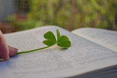 Green clover leaf between open pages in book Stock Photos
