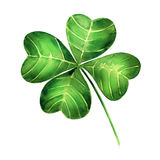 Green clover leaf  on white background Royalty Free Stock Photos