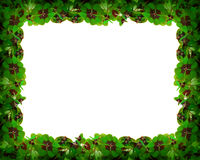 Green clover leafs frame . Stock Images