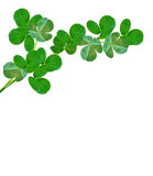 Green clover leaves on a background summer landscape. stock photos