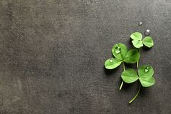 Green clover leaves on gray background,. Flat lay composition with space for text stock image