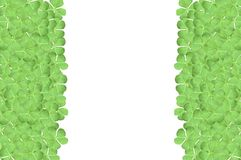Green clover leaves Royalty Free Stock Photo