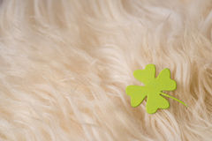 Green clover symbol on sheep's clothing Stock Photography