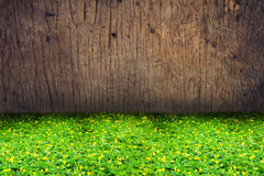 Green clover and yellow blossom  with wood texture background Stock Photography