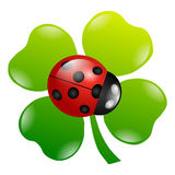 A green cloverleaf. Isolated on a white background Royalty Free Stock Images