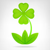 Green cloverleaf plant isolated on white Stock Photo