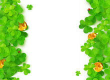 Green clovers with golden coins on white. Green vector clovers with golden coins on white background Stock Photography