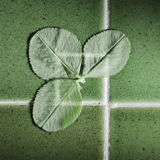Green clovers on green tiles. Royalty Free Stock Photo