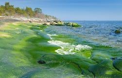 Green coast Stock Photos