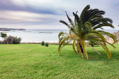 Green coastline with palm at Adeje town on Tenerife island, Spain Royalty Free Stock Photography