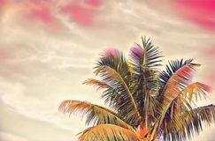 Green coco palm tree on pink sky digital illustration. Romantic tropical vacation banner template with text place. Summer vacation on exotic island. Vivid vector illustration