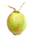 A green coconut. A ripe green coconut for drinking Royalty Free Stock Image