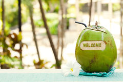Green coconut with carving welcome on a swimming pool summer background Copy space Stock Photography