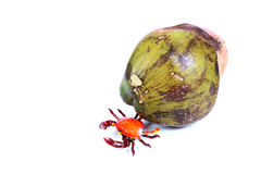 Green coconut and crab Stock Photos
