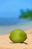 Green coconut fell on beach Royalty Free Stock Photos
