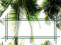 Green coconut fronds with text frame royalty free stock images