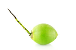 Green coconut Fruit. On white background Royalty Free Stock Photos