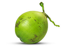 Green coconut fruit isolated on white background,clipping path royalty free stock images