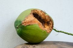 Green coconut with hole on table. Coconut with hole gnawed by squirrel stock photos