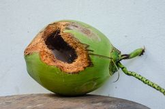 Green coconut with hole on table. Coconut with hole gnawed by squirrel royalty free stock photo