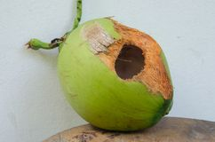 Green coconut with hole on table. Coconut with hole gnawed by squirrel stock photography