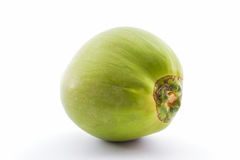Green Coconut . Stock Photos