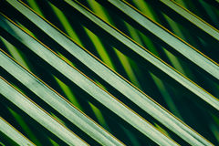 Green coconut leaf pattern Stock Image