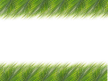 Green coconut leaves border Stock Photo