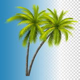 Green Coconut Palm Royalty Free Stock Photos