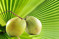 Green coconut on plam leaves pattern Royalty Free Stock Photography